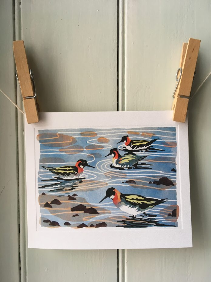 Phalaropes card